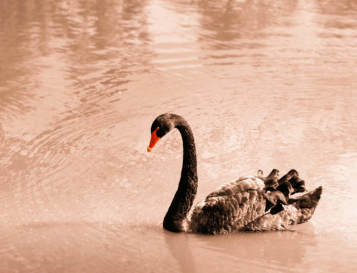 "How can companies survive and thrive in a ""black swan"" event by embracing open innovation?"
